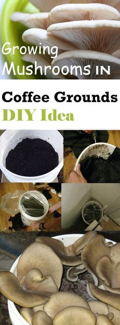Growing mushrooms in coffee grounds is simple and easy and in this DIY you'll . - Growing mushrooms in coffee grounds is simple and easy and in this DIY you'll learn how to grow y - Growing Shiitake Mushrooms, Grow Your Own Mushrooms, Garden Mushrooms, Growing Mushrooms Indoors, Growing Herbs, Growing Vegetables, Culture Champignon, Hydroponic Gardening, Hydroponics