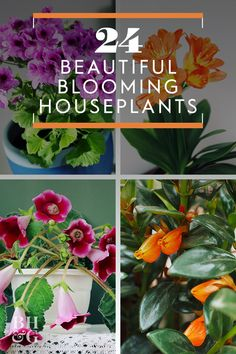 Find fragrance and beauty in flowering houseplants. The blooming houseplants listed here will help you pick the best ones for your home. Indoor Flowers, Flowering Vines, Beautiful Gardens, Indoor Flowering Plants, Plant Care Houseplant, Houseplants, Beautiful Flowers Garden, Types Of Houseplants, Best Perennials For Shade