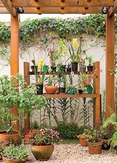 Coleção de orquídeas - Revista Casa e Jardim