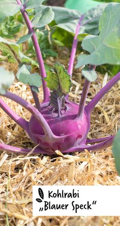 Watering Can, Canning, Plants, Fall Harvest, Mulches, Seven Days, Compost, Gardening, Plant