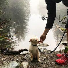 Sitttttttt........stayyyyy......Good boy.