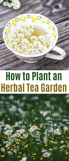 Herbal Tea Garden, Gardening, How to Plant a Tea Garden, Plants for a Tea Garden, Drying Plants for Tea