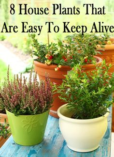 If you are anything like me, it seems like quitea responsibility to keep something alive! Well, here are some indoor plants that do good, and are notoriously easy to keep alive. 1. Aloe. Aloe is an easy to care for plant thathas distinctive elongated leaves that fan out from a