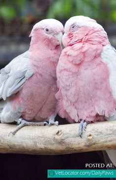 Daily Paws Picture of the Day: Lovely Parrots! - http://www.vetlocator.com/dailypaws/2014/09/daily-paws-picture-day-lovely-parrots/