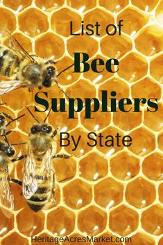 Below is a list of bee suppliers throughout the US. Although most are apiaries that raise and sell bees, some places are only dealers. Beekeeping For Beginners, Beekeeping Equipment, Beekeeping Supplies, Bee Supplies, Raising Bees, Backyard Beekeeping, Bee Friendly, Save The Bees, Bee Happy