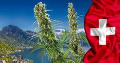 Switzerland Opens the Door to Marijuana