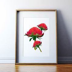The beautiful and distinctive Waratah (a Eora word borrowed from Sydney's original inhabitants) is found along New South Wales' Central and South Coasts, attracting birds and floral enthusiasts alike with its showy crimson flowers. Australian Gifts, Australian Flowers, How To Attract Birds, Christmas 2016, Native Plants, Flower Prints, Vibrant Colors, Graphic Design, Art Prints