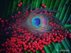 28 Ideas for bird photography art god Radha Krishna Pictures, Radha Krishna Photo, Krishna Art, Hare Krishna, Radhe Krishna Wallpapers, Lord Krishna Hd Wallpaper, Colorful Bird Tattoos, Light Bulb Art, Love Wallpapers Romantic