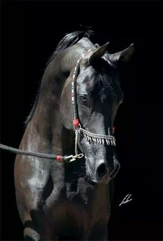 Beautiful horse! ♡