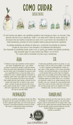 Como cuidar de suculentas