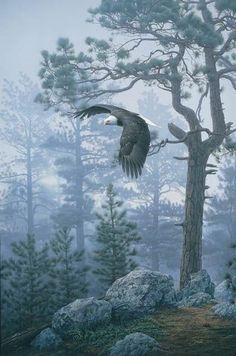 Eagle foraging