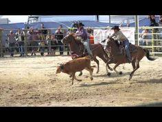 Travel Information, Livestock, Rodeo, Sunny Days, Cowboys, Evolution, Gem, Saints, France