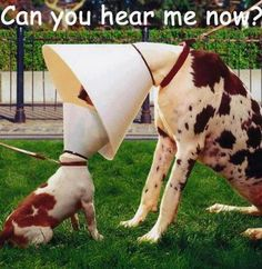 Can you hear me now?, animals, dogs, cone-of-shame