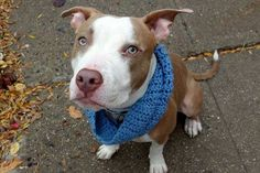 OZ- TO BE DESTROYED TODAY BY NYC ACC - THURS. - 12/8/16- AVAILABLE AT MANHATTAN ACC -#A1097735- urgentpodr.org.