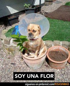 Soy una flor.