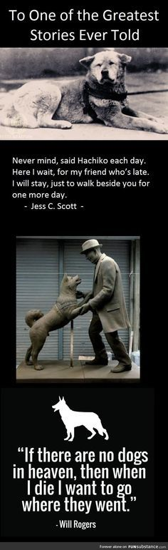 A Moment of Silence: Hachiko died on March 1935 - FunSubstance Hachiko Dog, Hachi A Dogs Tale, I Love Dogs, Puppy Love, Animals Beautiful, Cute Animals, A Dog's Tale, American Akita, Loyalty