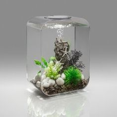 biOrb Life Rectangle Aquarium Tank & Reviews | Wayfair