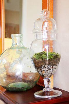 Terrarium! Apothecary jars are the best....