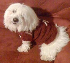 crochet manteau chien patron gratuit | Pull chien Maude, Pet Care, Crochet, Couture, Pets, Kuchen, Animal Clothes, Animaux, Easy Patterns
