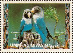 Emiratos Árabes Unidos 1992 -   El Inseparable Enmascarado o Inseparable Cabecinegro