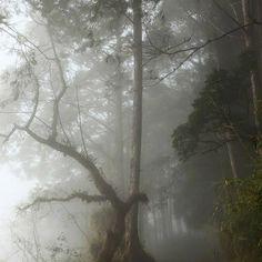 Dark Green Aesthetic, Night Aesthetic, Nature Aesthetic, Dark Paradise, Gloomy Day, Forest Fairy, Dark Forest, Photo Dump, Find Image