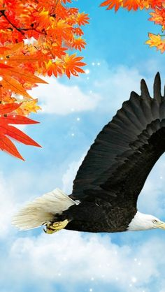 autumn-bird-clouds-eagle