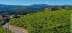 Viñas de Alvarinho, Melgaço Turismo en la Región del Minho | Turismo en Portugal