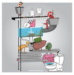 Así es y funciona el sistema digestivo