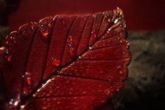 Brooch tree leaf plant brooch flower brooch leaf with dew