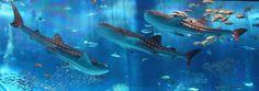 Gorgeous Aquarium