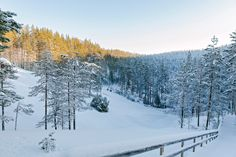 The winter is a wonderful time to enjoy the charm of the snow-coated nature of Rokua. Rokua Health & Spa Hotel. National park, Finland.