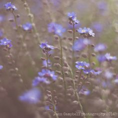 petit fleurs. Fine Art Photography print