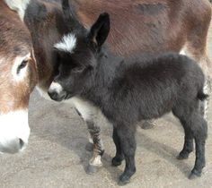 Awwwwww!!!  #donkeys Visit our page here:  http://what-do-animals-eat.com/donkeys/