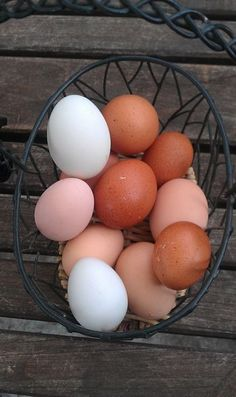 Crested Cream Legbar Hatching Eggs X 6 Relieving Rheumatism And Cold Pet Supplies