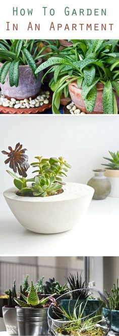 An indoor garden is one of the fastest and easiest ways to instantly add style and life to your small space.  Here's how to get a little green in your life, no matter what your space or style: http://www.ehow.com/how_5078057_garden-apartment.html?utm_source=pinterest.com&utm_medium=referral&utm_content=curated&utm_campaign=fanpage