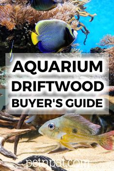 What is the best aquarium driftwood? What are the different types of driftwood for aquariums? How can you prepare you own? Animals For Kids, Animals And Pets, Baby Animals, Funny Animals, Fish Tank Terrarium, Aquarium Fish Tank, Aquarium Stand, Animal Quotes, Animal Memes