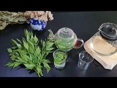 Ceai de Leustean. Care ajuta la rinchi, vedere. Si sistemul nervos. Benificile Lui. - YouTube Youtube, Metabolism, Health, Youtubers, Youtube Movies