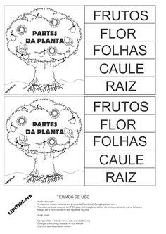 Funções das Partes da Planta Atividade Recorte Colagem e Escrita