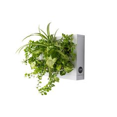 now on eboutic. Plant boxe for the wall - home decoration Decoration, Herbs, Flooring, Interior Design, Wall, Plants, Inspiration, Beautiful, Home Decor