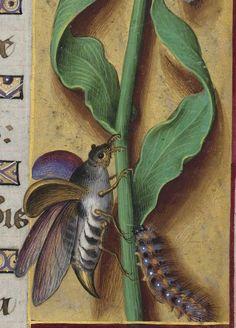 Grandes Heures d'Anne de Bretagne 1684 102r