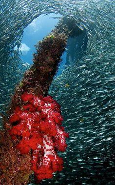 Raja Ampat Underwater - Papua - Indonesia