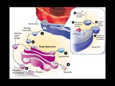 Cell Structure and Function - PowerPoint - Tangstar Science - YouTube