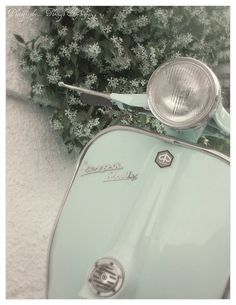 Minty fresh!, via Flickr. Mint Green Aesthetic, Aesthetic Colors, Aesthetic Vintage, Aesthetic Pictures, Aesthetic Pastel Wallpaper, Aesthetic Wallpapers, Photo Wall Collage, Picture Wall, Mint Color