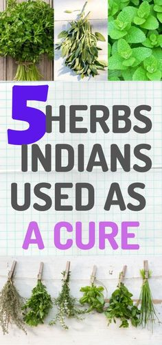 The Cherokee Indians believed that our creator gave us the herbs that can cure any disease. They used these herbs and plants as cures for hundreds of years. Health And Fitness Articles, Health Advice, Health And Wellness, Health Fitness, Diabetes Treatment, Cancer Treatment, Cancer Cure, Colon Cancer, Prostate Cancer