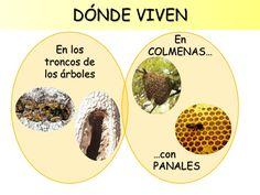 As abellas viven .