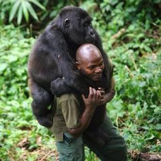 Virunga National Park....  Warden & Gorilla - A Real Friendship  pic.twitter.com/Ak0GBdupSD