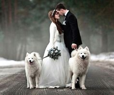 Beautiful Winter Scene With Dogs In Snow And Married