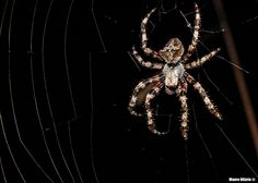 Mauro Hilário posted a photo:  A friend with 8 legs and skilled with silk