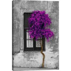 Tree in Front of Window Canvas Print