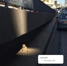 You Have Found The Chosen Cat